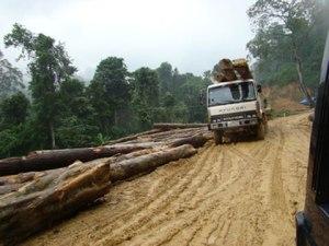 Để xây dựng thủy điện Hương Sơn (xã Sơn Kim, huyện Hương Sơn, Hà Tĩnh) hàng vạn cây rừng nguyên sinh của dãy Trường Sơn đã bị đốn hạ cho tích nước lòng hồ và làm 21km đường vào công trình