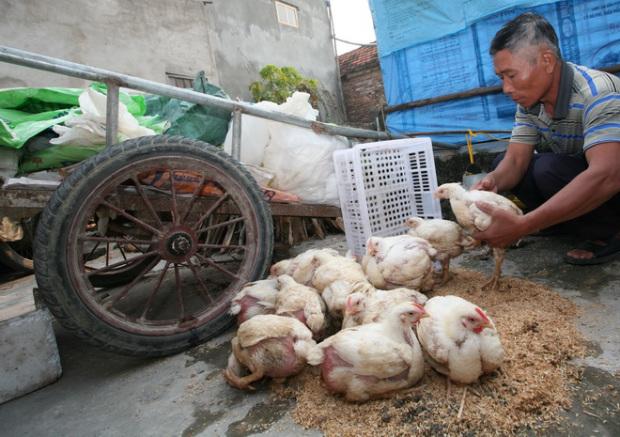 Ông Hào với chiếc xe cải tiến đi mua phế liệu và đàn gà công nghiệp sắp chết rét