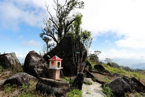 Cây chè trăm tuổi do ông Yersin trồng năm 1915 bên tảng đá núi