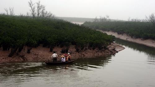 Hai bên sông Vọp là những rặng sú mọc xanh ngắt