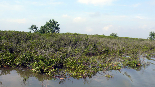 Rừng ngập mặn tại vườn quốc gia Xuân Thủy