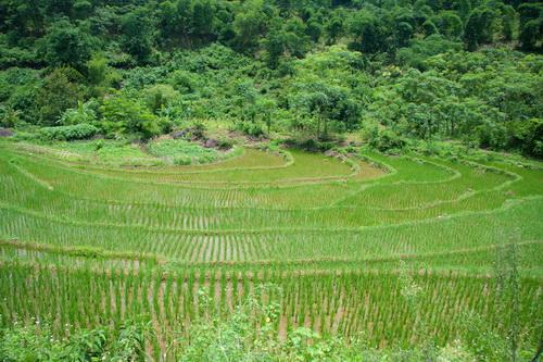 Ruộng bậc thang kiểu dáng tròn và bậc thấp đặc trưng ở Tú Sơn