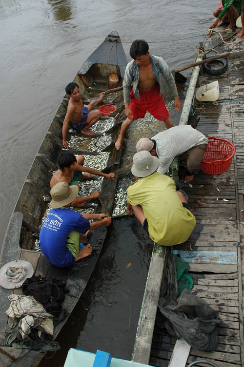 Vào mùa nước nổi, đánh bắt cá là nguồn thu nhập chính của gần 500 người dân sinh sống xung quanh khu vực VQG Tràm Chim