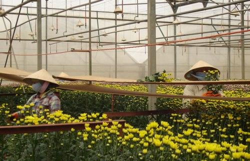 Làng hoa Hà Đông được hình thành từ năm 1938.