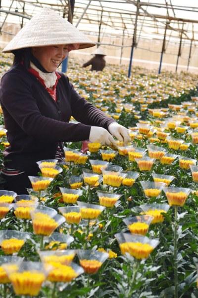 Làng hoa Thái Phiên, địa chỉ du lịch quen thuộc của nhiều du khách khi đến Đà Lạt.