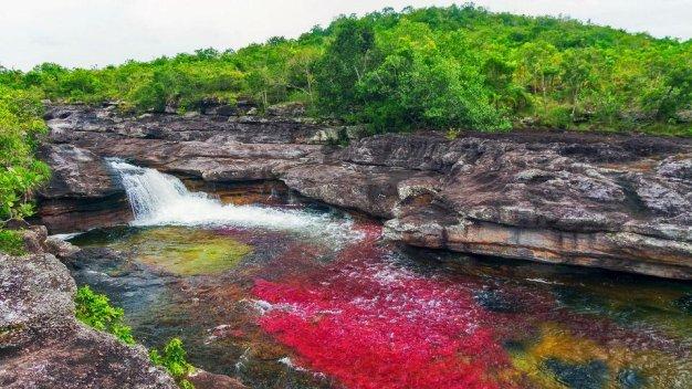 Caño Cristales - dòng sông nhiều màu sắc